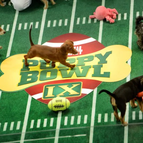 Puppy Bowl: un evento para concienciar
